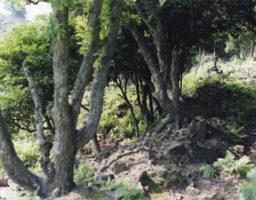 nozaki-jima no shika001