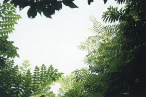 nozaki-jima001